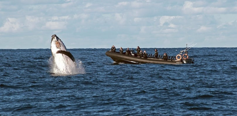 Whale Watching on Ocean Extreme